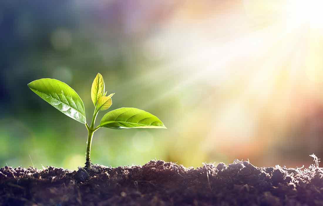 Plant BASED SUMMIT